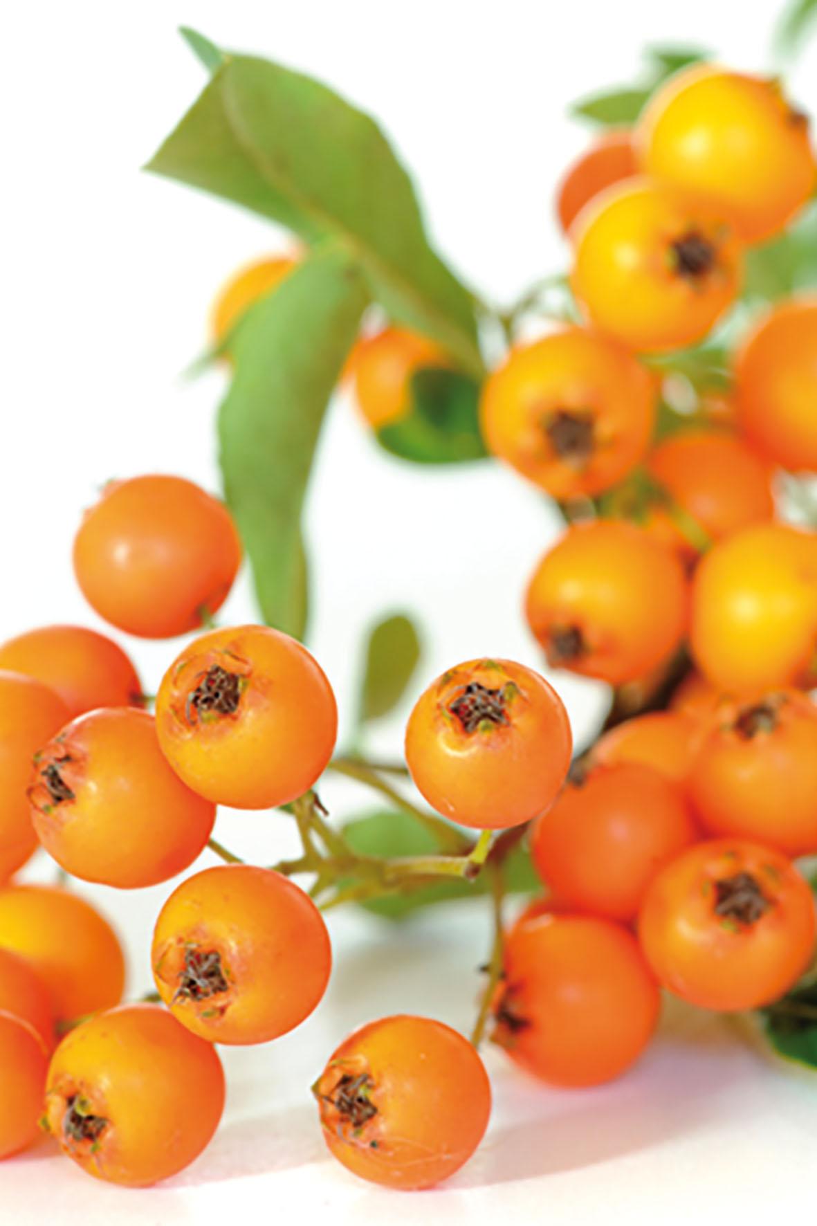Ein Nahrungsergänzungsmittel mit Sanddorn, Vitaminen, sekundären Pflanzenstoffen sowie Omega-Fettsäuren kann die Schleimhäute im Genitalbereich gezielt regenerieren.